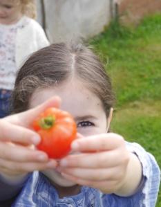 tomato-large